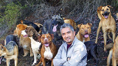 Der Hundeflüsterer