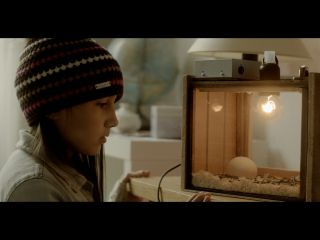 Zugvögel - Wenn Freundschaft Flügel verleiht | TV-Programm KiKA