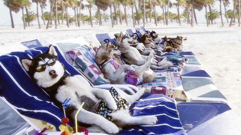 Snow Dogs - 8 Helden auf 4 Pfoten