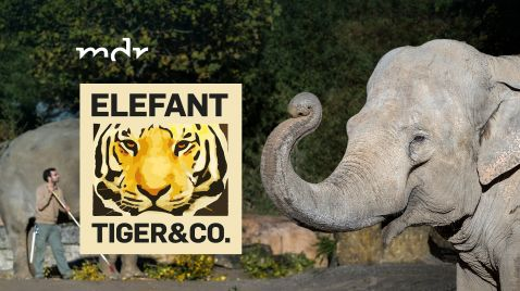 Elefant, Tiger & Co. auf MDR