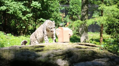 Bronx Zoo - Tierpark der Superlative auf Animal Planet